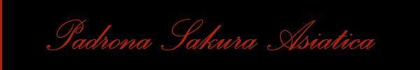 Padrona Sakura Asiatica  Napoli Mistress Trav 3423214087 Sito Personale Class